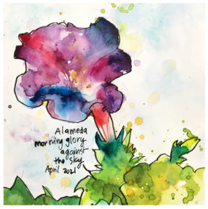 watercolor painting of morning glory wildflowers by emily weil