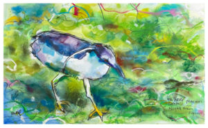 watercolor painting of night heron by emily weil